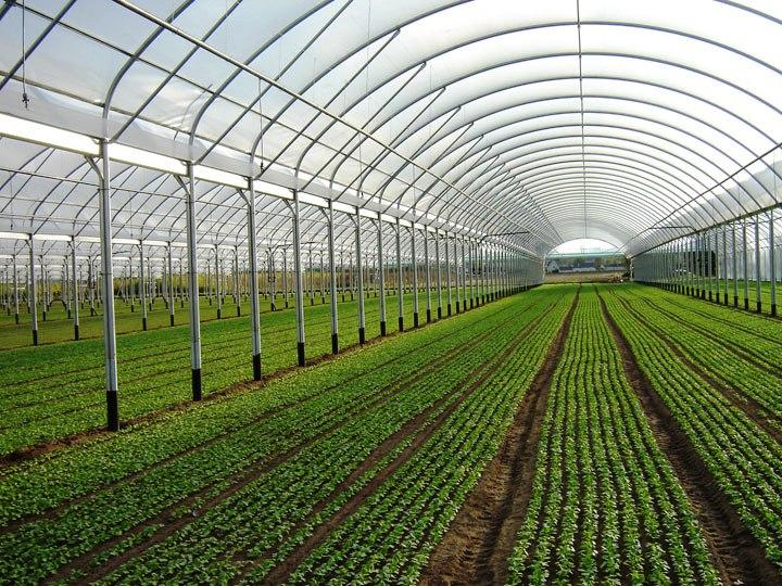 Serre fotovoltaiche tutte le offerte cascare a fagiolo for Serre agricole usate in vendita