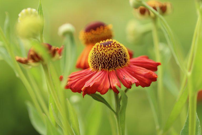 ESTATE. I rimedi naturali per salvare le nostre piante da insetti e zanzare!