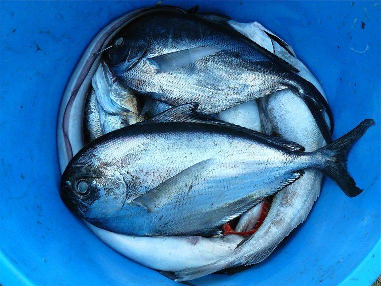 BIOLFISH: acquacoltura biologica e pesca sostenibile. Pronti per la terza edizione, ecco alcuni dati