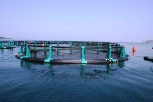 gabbia-acquacoltura