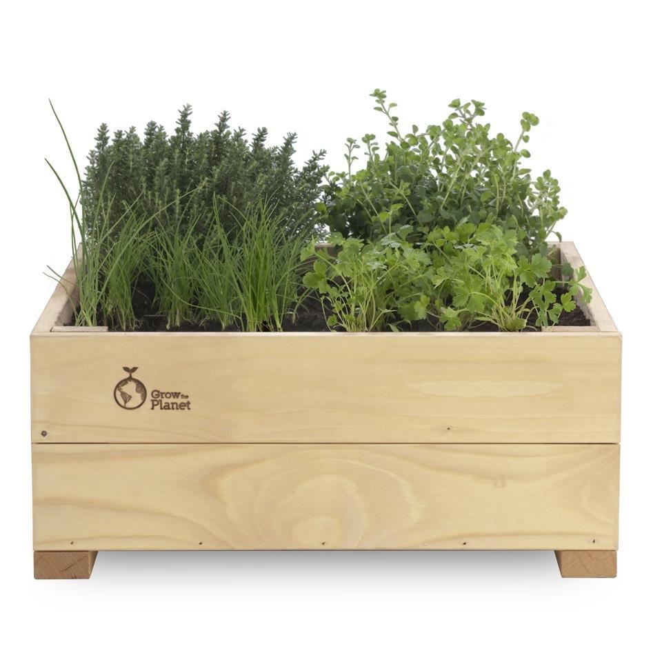 Coltivare In Casa Piante Aromatiche rosmarinonews.it - idee green- erbizia, il giardino di erbe