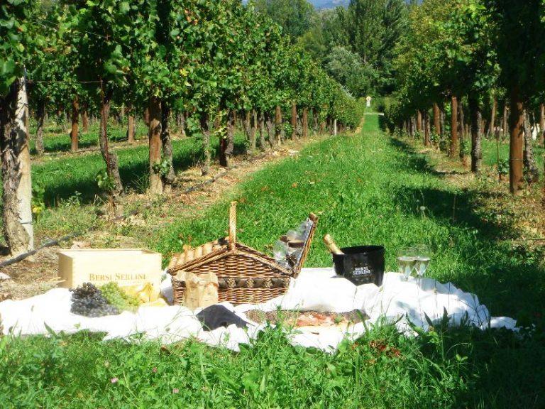 XII Osservatorio Turismo del Vino. Nonostante la continua crescita, l'Italia non è ancora pronta!