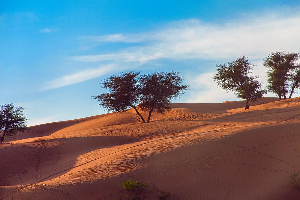 Viaggio in India deserto 3