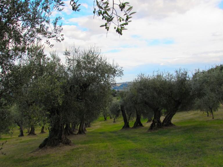 Cartoceto: a novembre il Festival. Una mèta ricca di storia, natura ed olio DOP