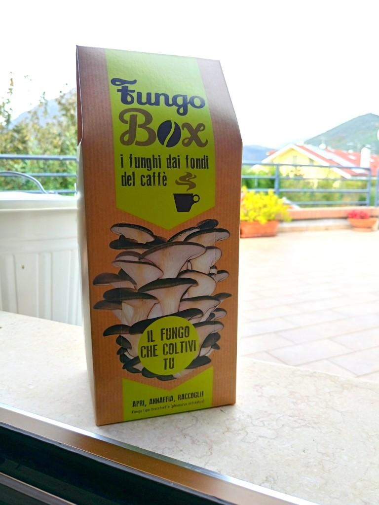 fungobox-1