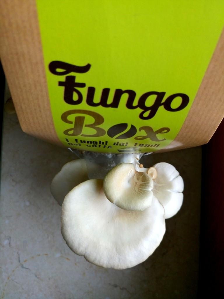 fungobox-4