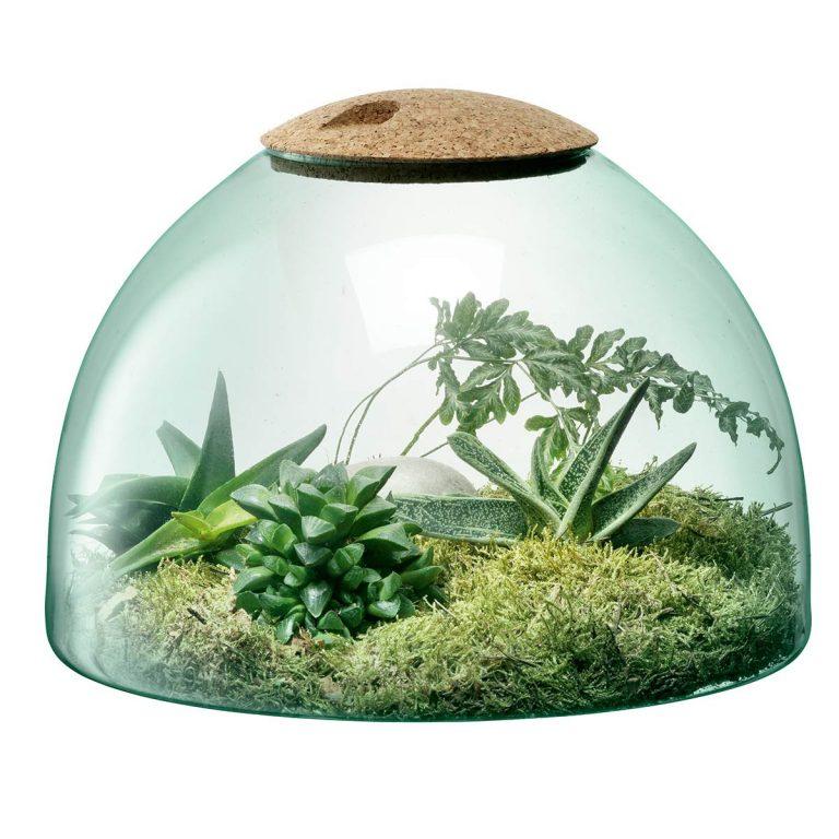 Voglia di realizzare un terrarium? Ecco come…in poche e semplici mosse!