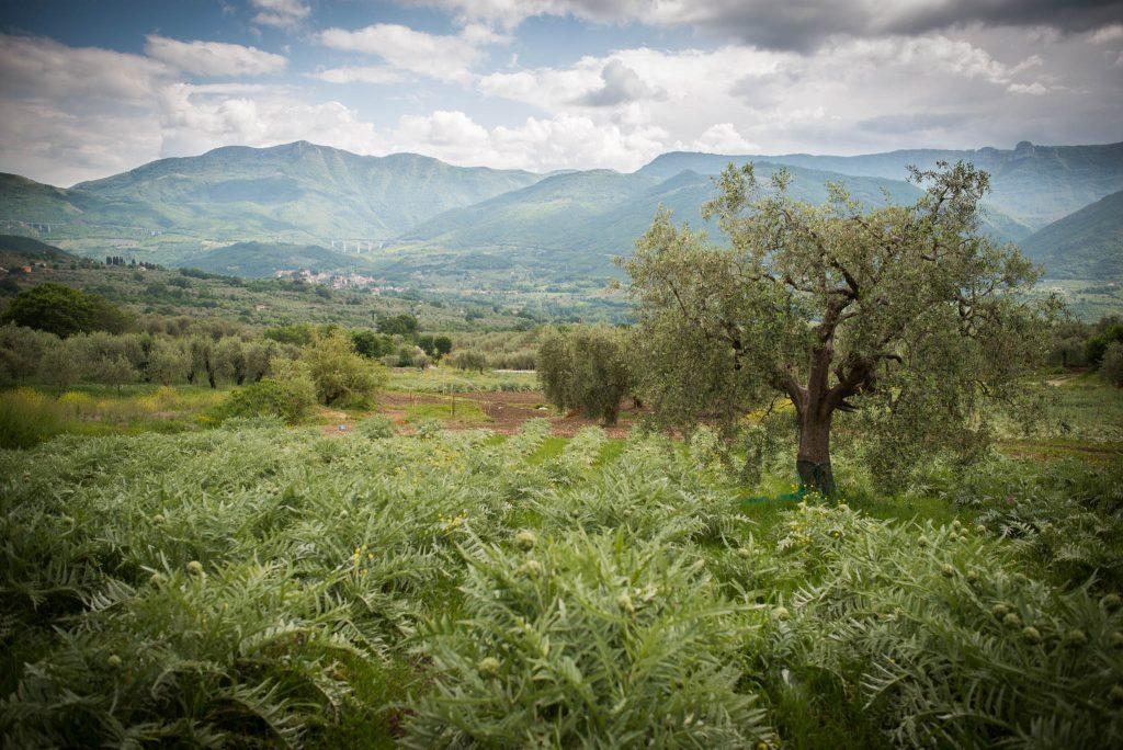 Bianco Tanagro, rimandata l'undicesima edizione. L'appello: Ora acquistiamo dai contadini, se vogliamo sopravvivano!