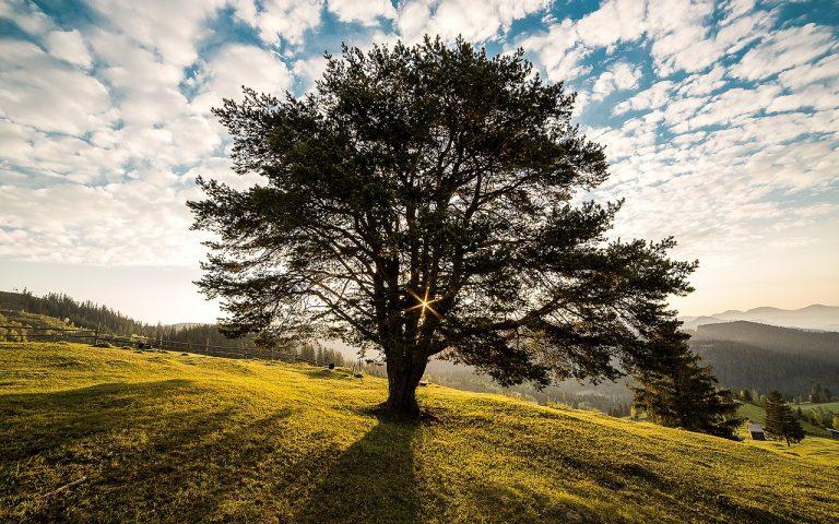 Si arricchisce l'elenco degli alberi monumentali d'Italia: 379 nuove iscrizioni